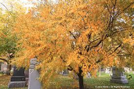 leaf color change in autumn janet davis explores colour