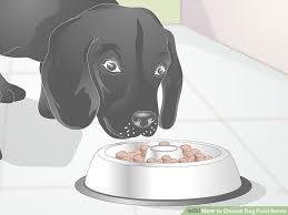 3 Ways to Choose Dog Food Bowls