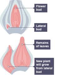 bbc bitesize gcse biology reproduction in plants revision 6