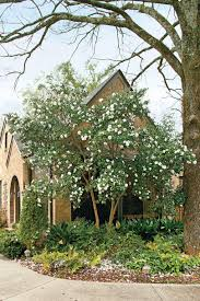Southern Living Home Plans by Best Spring Gardening Flowers Southern Living