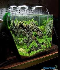 160 best fish tank images on pinterest fish aquariums fish