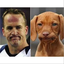 Manning Face Meme - here are 15 dogs who look like peyton manning barkpost