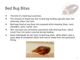 When Do Bed Bugs Bite Bed Bugs Gpha