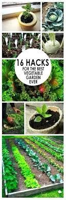 Ideal Vegetable Garden Layout Best Plants For Vegetable Garden Make It Pretty Summer Plants
