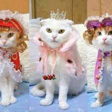 Halloween Pictures Costumes Check Hilarious Halloween Costumes Cat Red