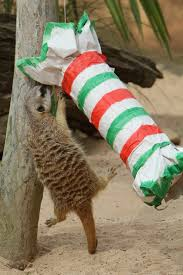 Taronga Zoo Christmas Party - taronga zoo animals receive enrichment treats for christmas zoos