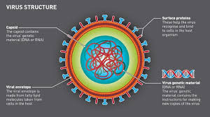 Virus Of The Mind The New Science Of The Meme - bbc science why can t we beat viruses