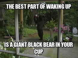 Bear Cocaine Meme - 35 very funny bear meme photos and images
