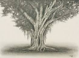 banyan tree graphite pencil drawing by aakritiarts on etsy