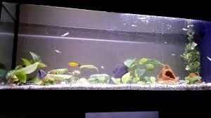 ghiaia per acquari come fare un acquario semplice e economico 1 il fondo