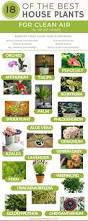 the best indoor plants 18 of the best indoor house plants to help purify the air u0026 detox