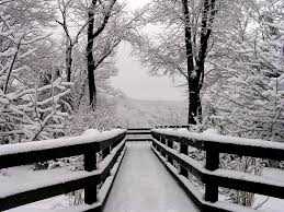 winter landscape photograph 11x14 black and white photography