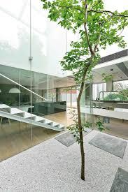 12 live indoor tree ideas