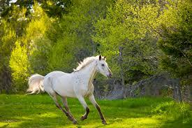 horse mask spirit halloween horses and sunburn or photosensitivity