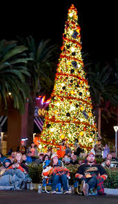 christmas tree with lights photos with lights all aglow o c christmas trees make a great