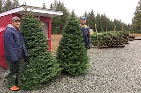 business is growing for local tree farm
