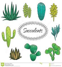 succulents plant vector set botanical green stock vector image