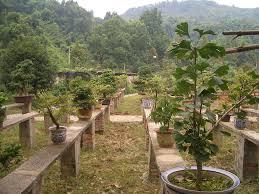 exterior design natural garden design with fresh weston nurseries