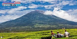 Teh Kayu Aro nikmati keindahan perkebunan teh kayu aro jambi tertua dan tertinggi