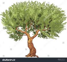 olive tree isolated vector illustration stock vector 188952770