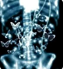 butterflies in the stomach butterfly lovely image
