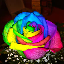 tie dye roses tie dye miscellaneous flowers and rainbow roses