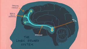 light up your brain curiosity it helps us learn but why npr ed npr
