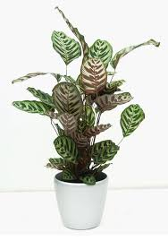 Low Light Indoor Trees 14 Top Houseplants You Should Pick For Very Low Light Area Tnc
