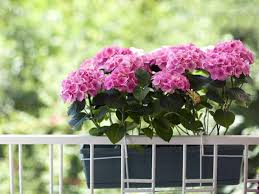 balkon grã npflanzen balkonpflanzen für norden süden osten und westen liebenswert