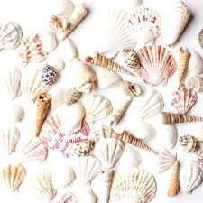 amazon com 100 seashell toothpicks for beach wedding shell tiki