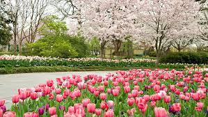 featured gardens dallas arboretum and botanical gardens