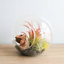 glass terrarium with 2 open ends
