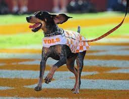 bluetick coonhound mississippi 10 fun facts about smokey wbir com