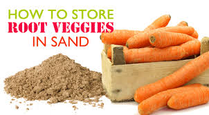 A Root Vegetable - diy extend the shelf life of root vegetables by storing them in