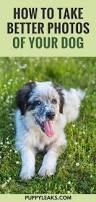 3598 best all the floofs adoptdontshop images on pinterest dog