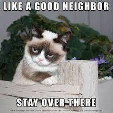 Meme Generator Grumpy Cat - 48 best grumpy cat images on pinterest funny things funny
