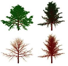 1 2 tree semantic modeling and editing of trees computer