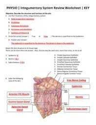 Answer Key For Anatomy And Physiology Lab Manual 37 Best Integumentary System Images On Pinterest Nursing Schools