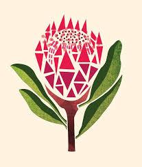 Protea Flower Best 25 Protea Art Ideas On Pinterest Protea Flower Protea