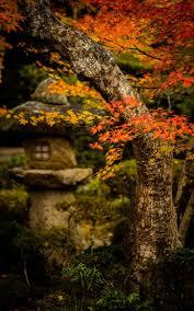 colorado u s japanese gardens 25 unique japan garden ideas on pinterest japan flower garden