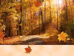 fall leaves wallpaper thanksgiving pictures