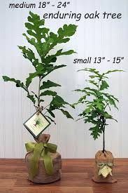 housewarming gift tree