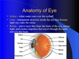 Anatomy Of The Eye Anatomy Of The Eye