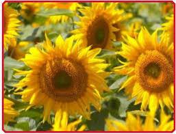 ukraine kernel holding s a sunflower oil in bulk