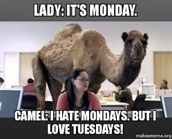 I Hate Mondays Meme - lady it s monday camel i hate mondays but i love tuesdays
