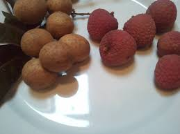 lychee fruit how to eat lychee and longan updated again a day in the life ii
