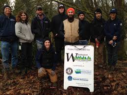 english native plants puget soundcorps uproots invasive species to safeguard waterways