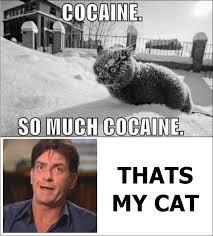So Much Cocaine Meme - cocaine