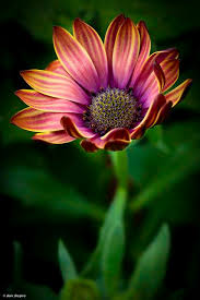 Awesome Looking Flowers Best 25 Most Beautiful Flowers Ideas On Pinterest Glowing