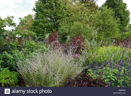 garden of ornamental shrubs and flowering plants bordered by stock